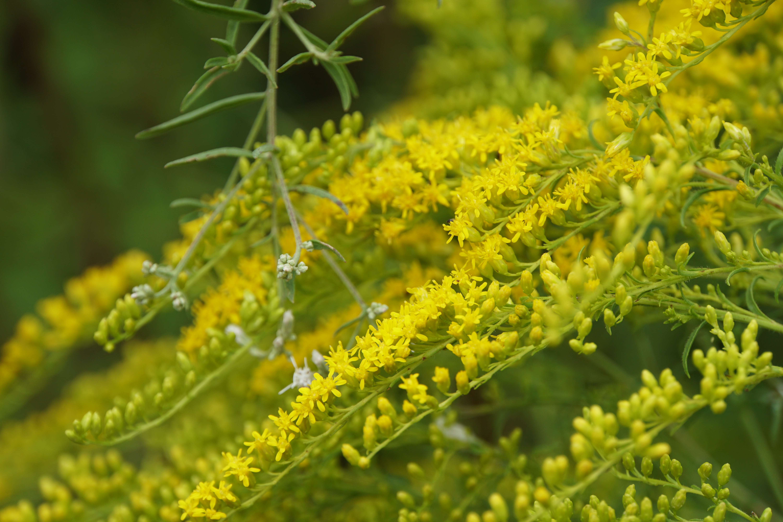 Yellow flowers 02 penelope peru photography yellow flowers 02 mightylinksfo